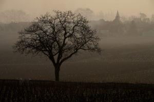 冬のクラヴォワヨンのブドウ畑